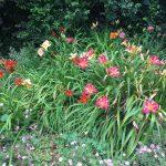 My Yorkshire Garden (Part 3)