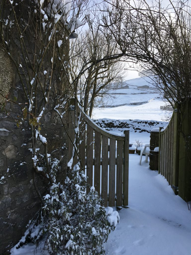 My Yorkshire Garden In Winter