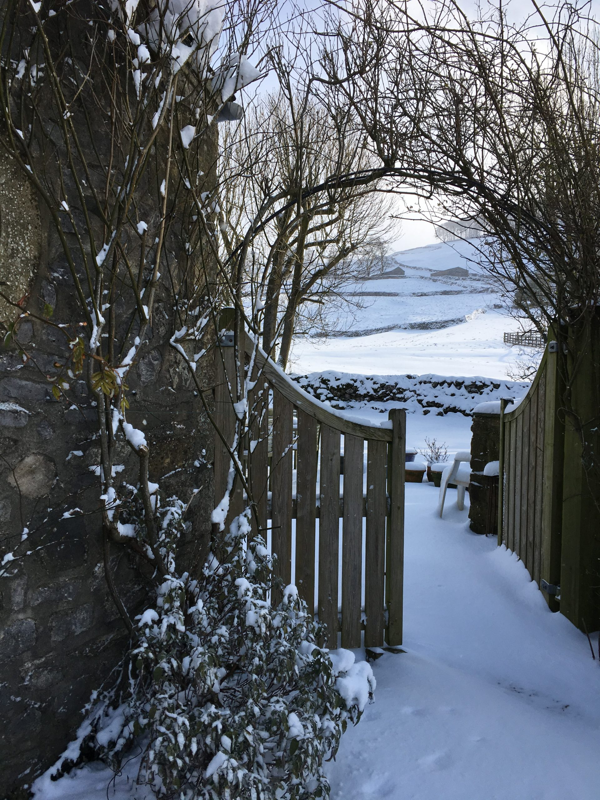 My Yorkshire Garden In Winter